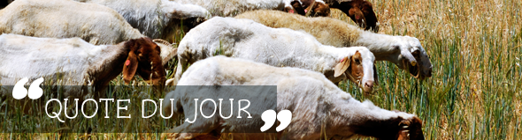 Kevin DeYoung on Embracing the Pastoral Approach